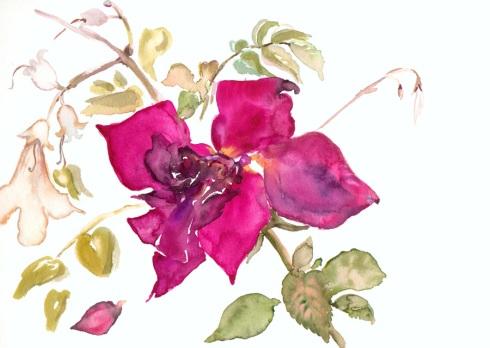 איריס קובליו, צבעי מים, 2002