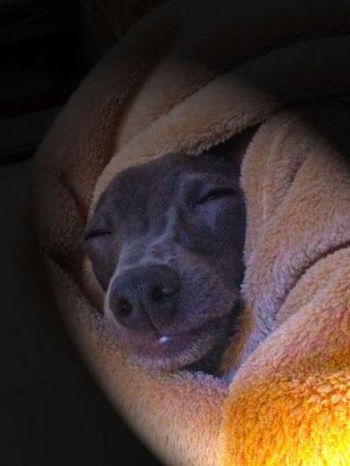 סקאיי, כלב הרוח שלי, ישן עמו עלי בפרח קליה, כמו כתם בסחלב, כמו אימא צופית בקן, ומושלם כמו פוגה ברה מזור של באך