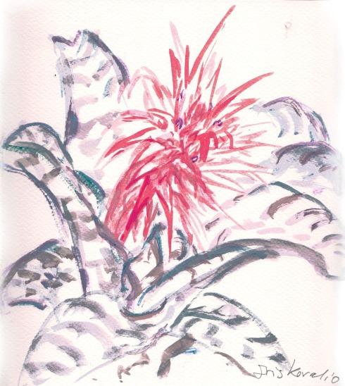 איריסיה קובליו, צבעי מים, אפריל 2014