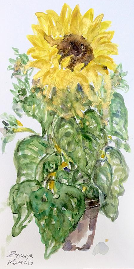איריסיה קובליו, צבעי מים