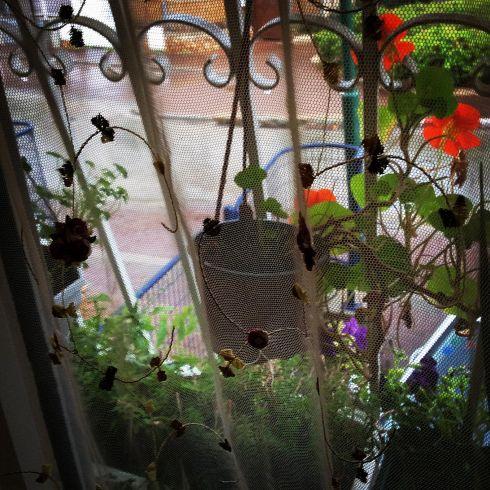 בחלוני