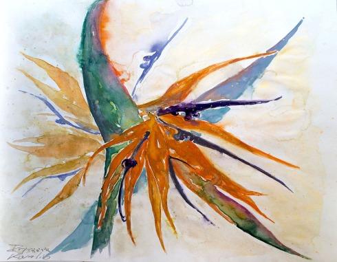 איריס קובליו, ציפור גן עדן, אקוורל, יוני 2014