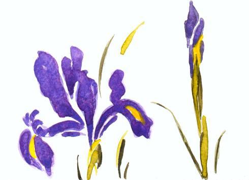 Copy of iris 3